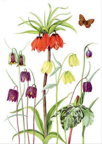 Fritillaries and Trillium with fritillary butterfly